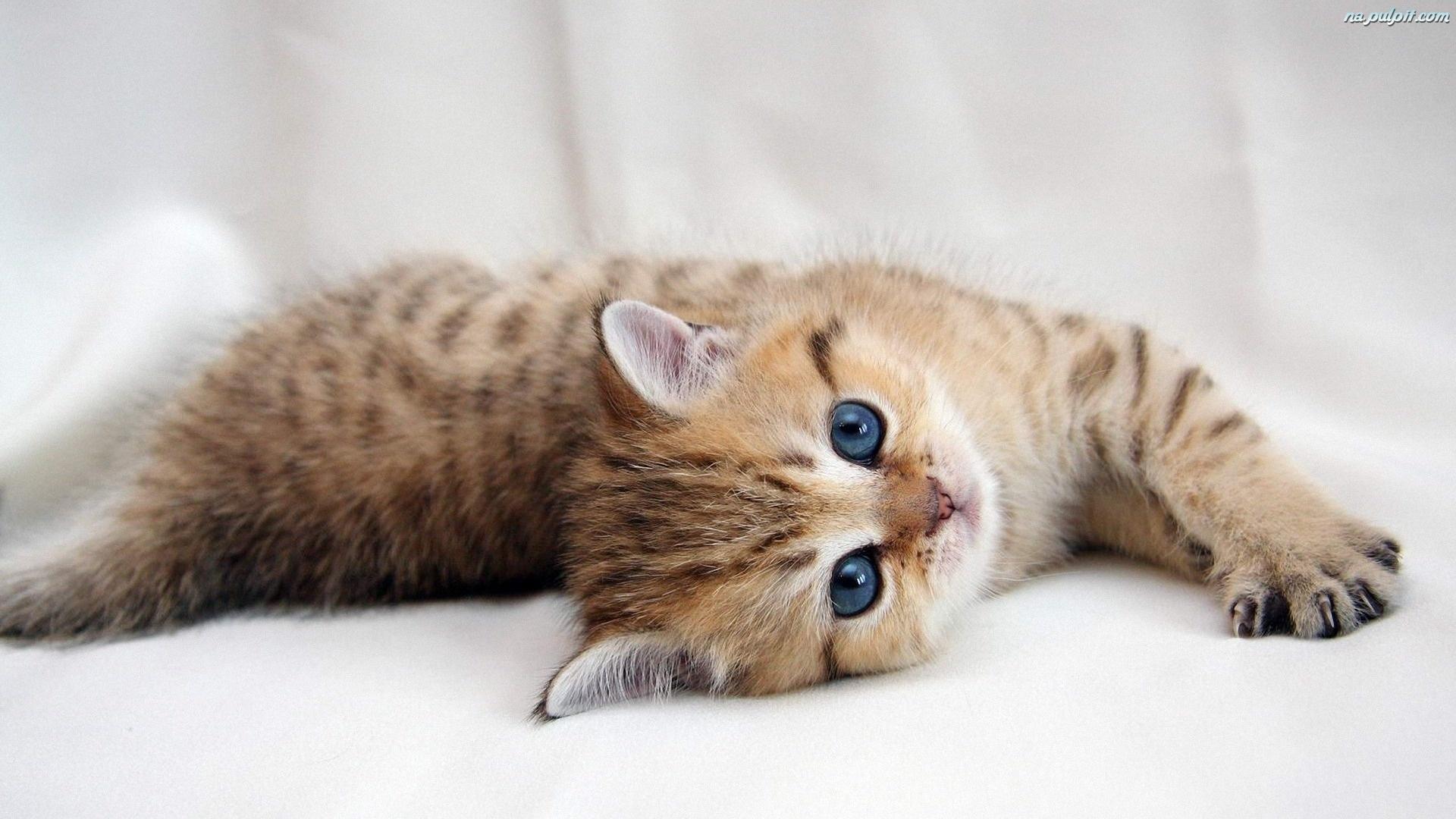 Mysterii ejejej kotek s a - Cute kittens hd wallpaper free download ...